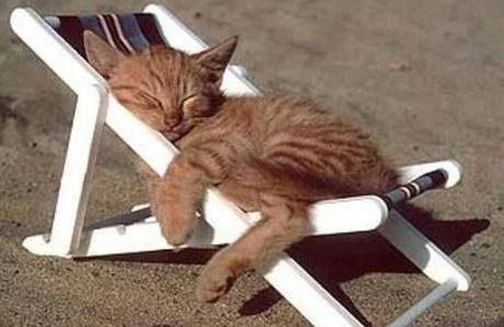 top-10-summer-cats-relaxing-in-deckchairs-L-buipB8